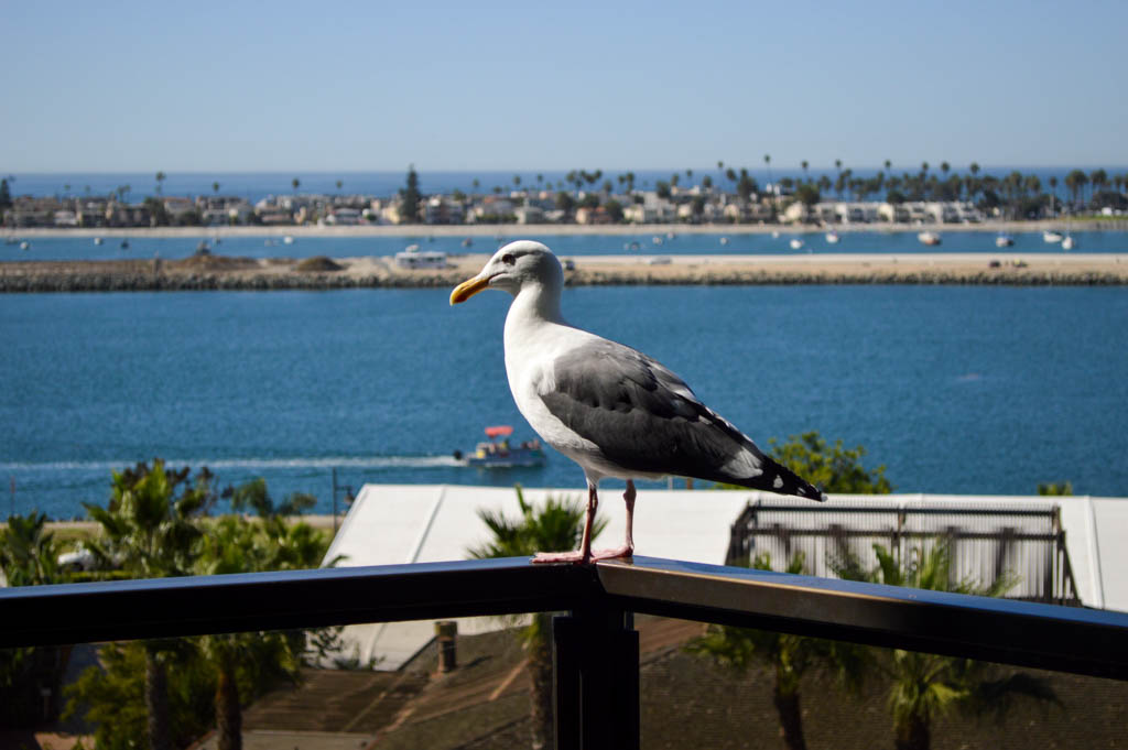 Hyatt Regency Mission Bay Good Eats San Diego California Local Mike Puckett GW-75